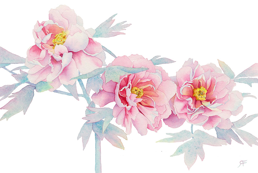 Trio of peonies.