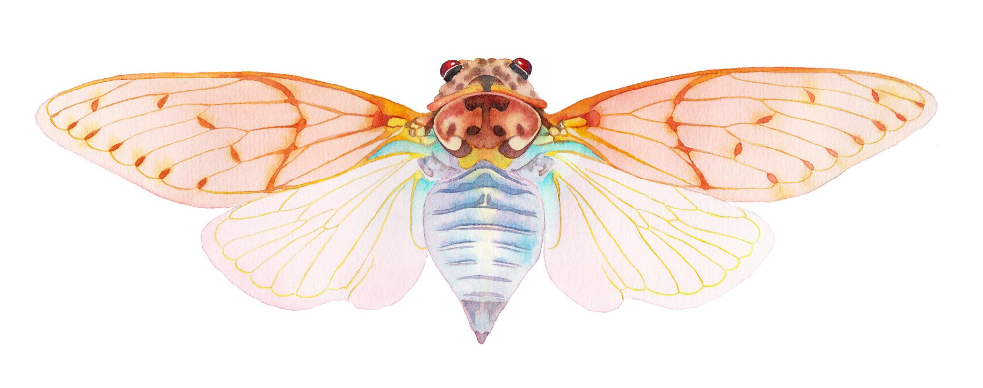 Cicada pink wings watercolour